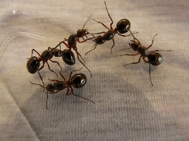 How Exterminators Get Rid of Ants