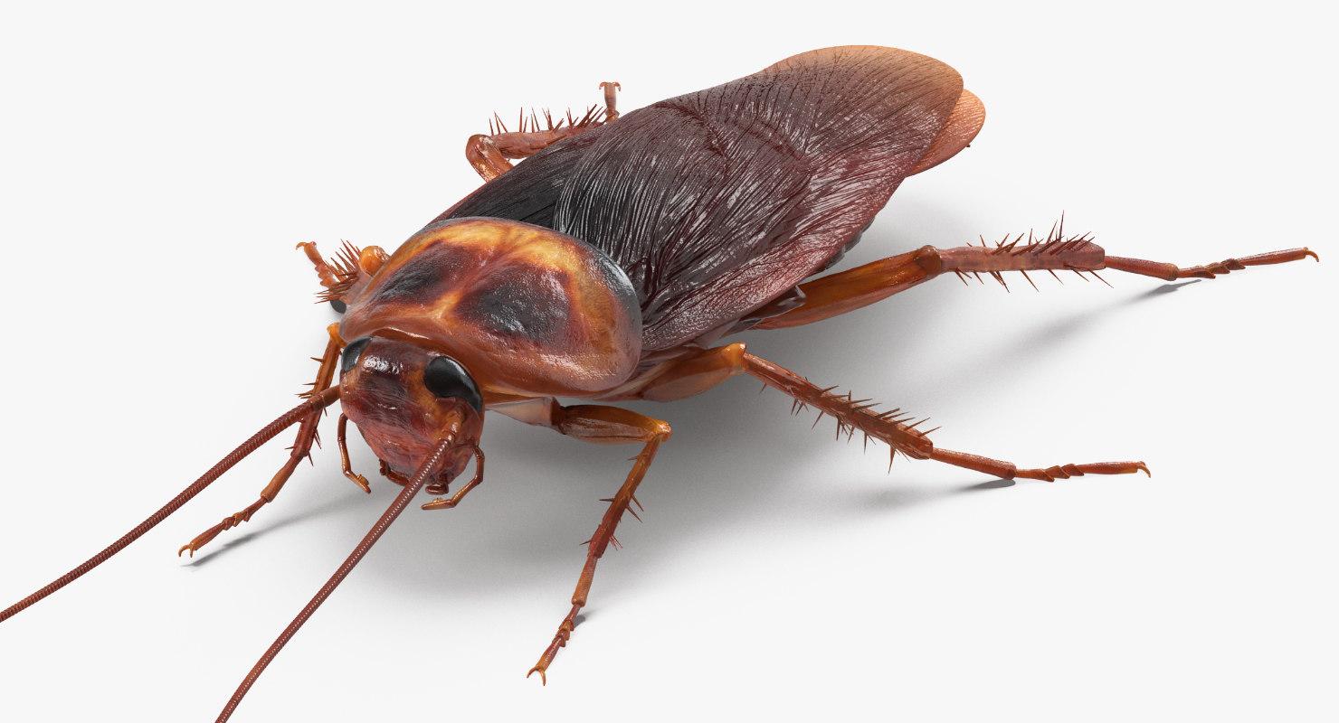cockroach-exterminator
