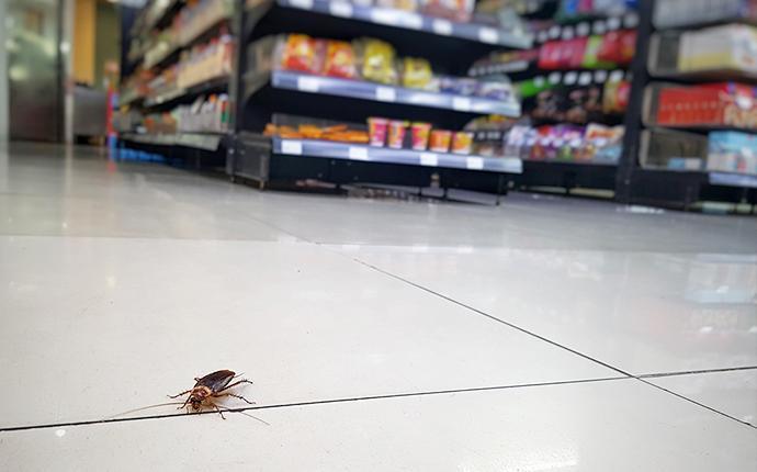 cockroach-in-market
